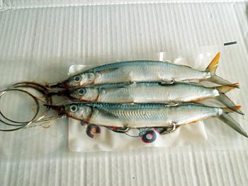 Fishing Rentals & Permits Tortola BVI